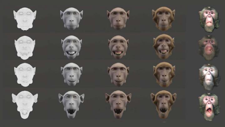 Monkeys Appreciate Lifelike Animation