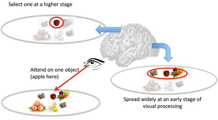 How Visual Attention Selects Important Information