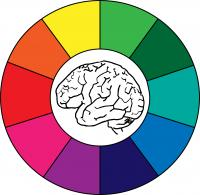 Brain with color wheel