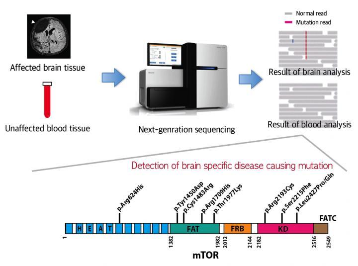 Schematic Image of Brain Specific Mutations