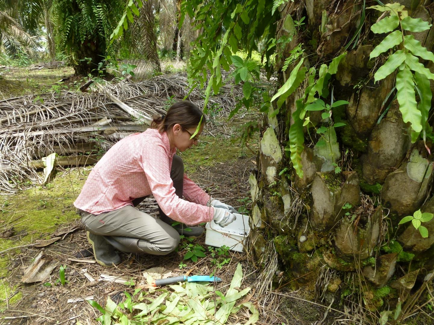 Female Researcher in Forest Clearning with Trowel and Container