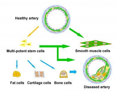 Stem Cell Schematic