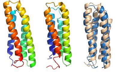 Transmembrane Protein