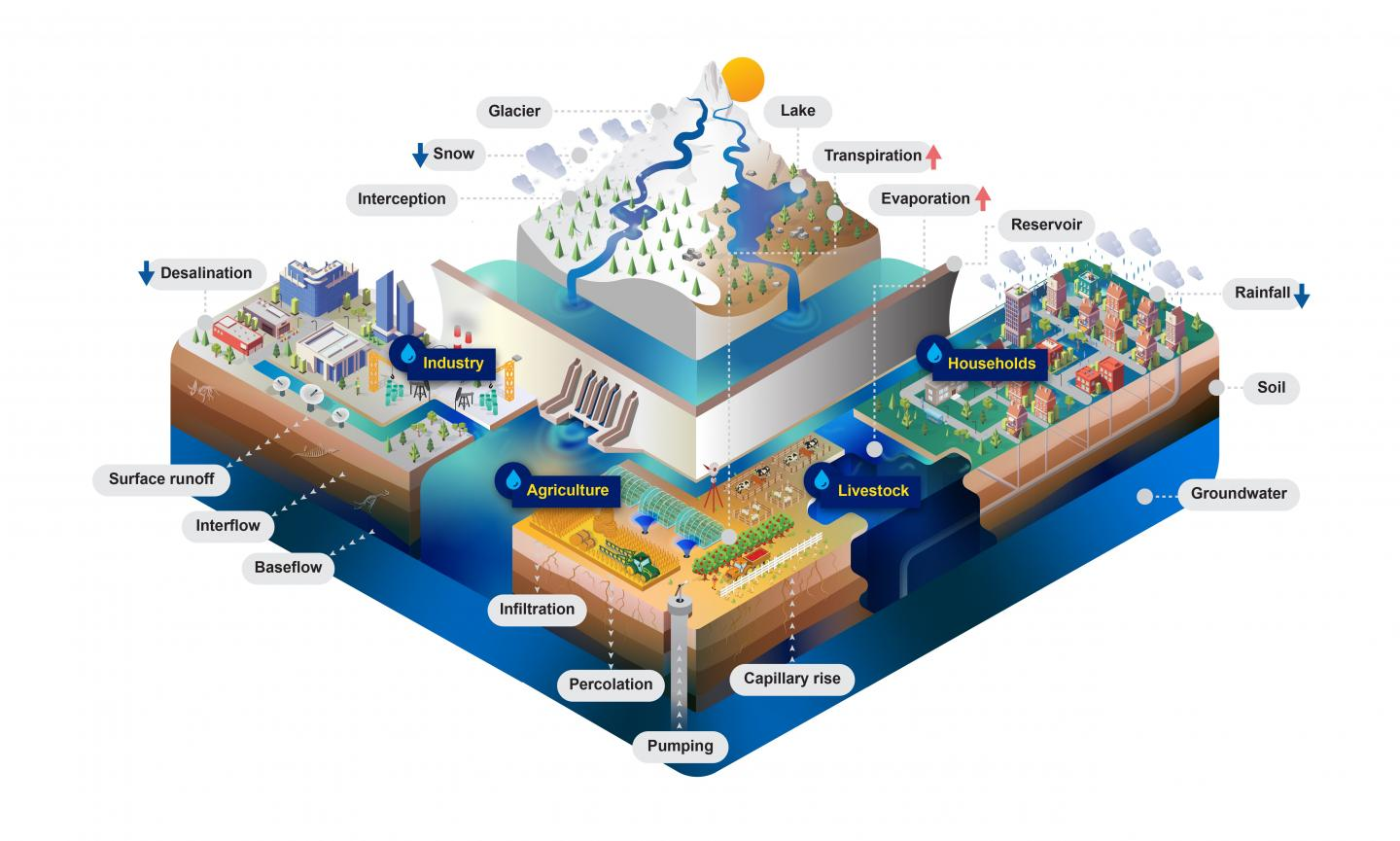 The Community Water Model