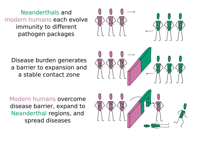 Disease Barrier Illustration
