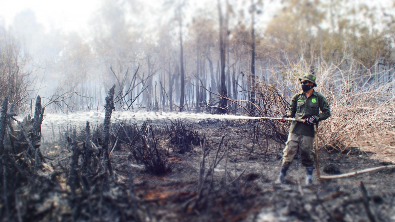 Forest fire in Sebangau