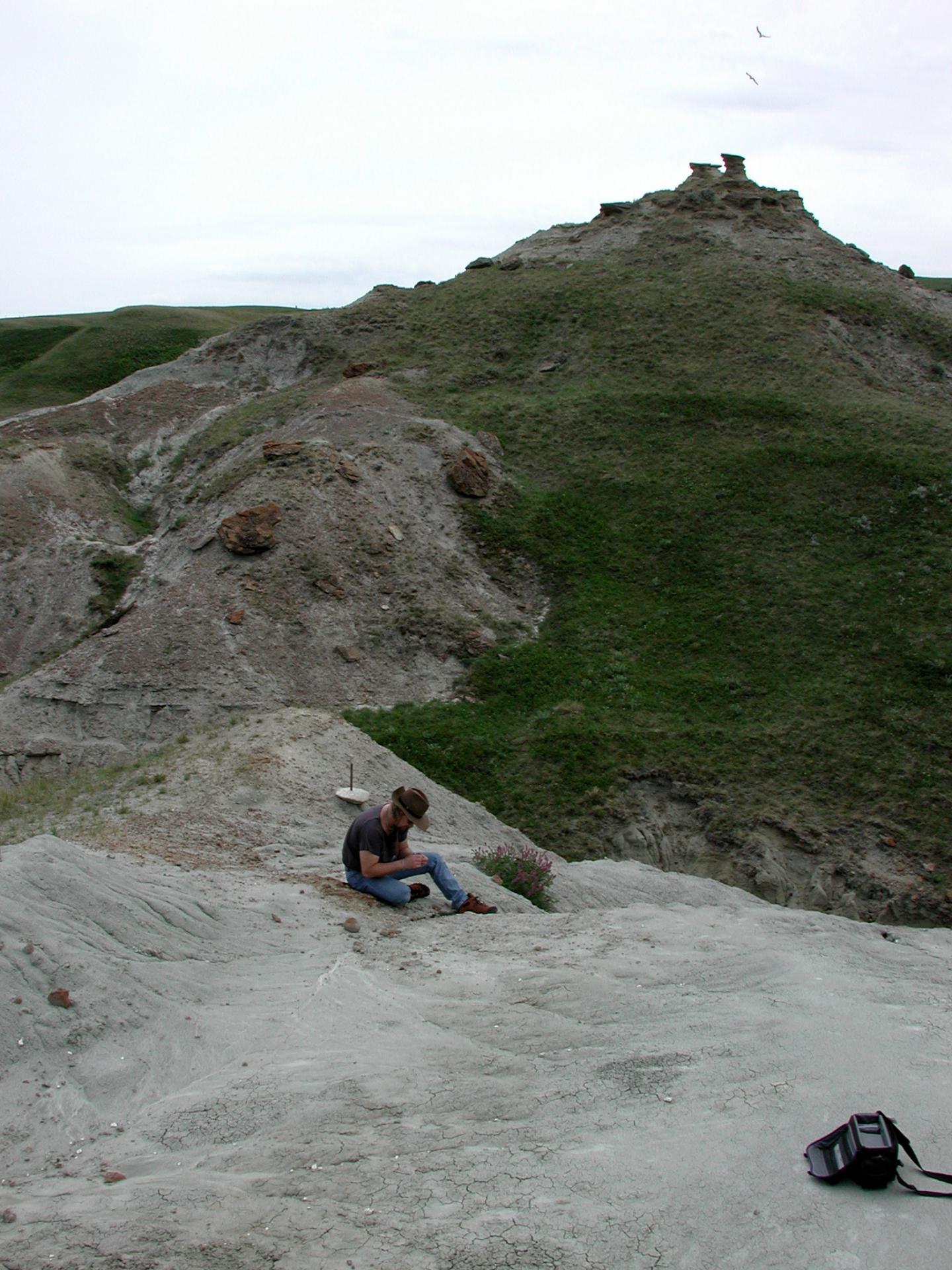 Dinosaur Nesting Site in Alberta, Canada