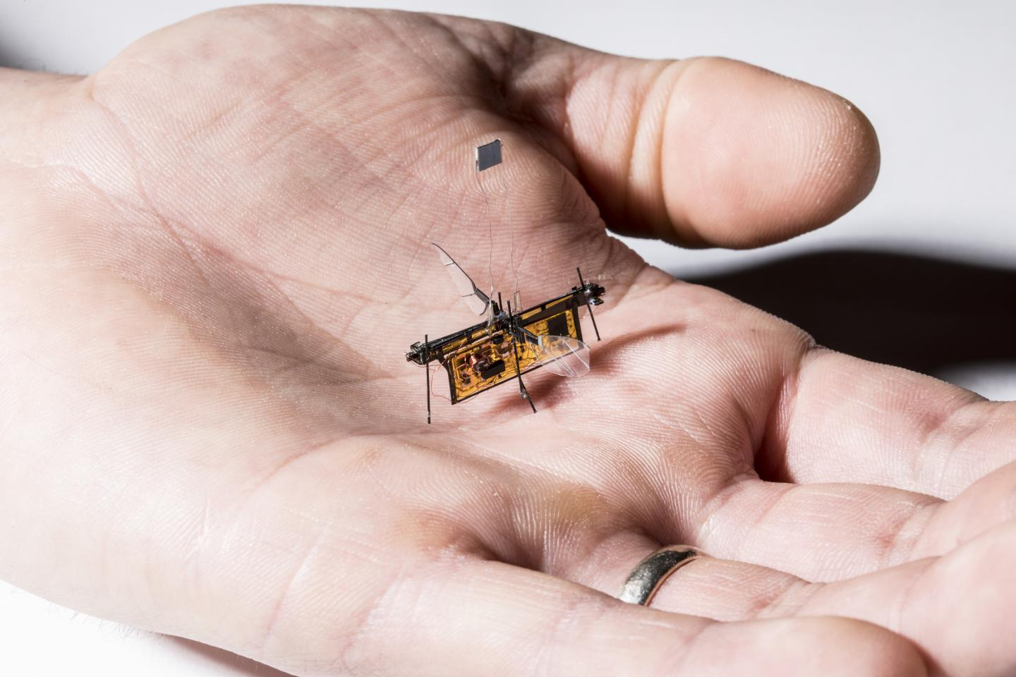 RoboFly fits in the Palm of Your Hand