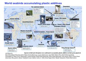 World seabirds accumulation plastic additives