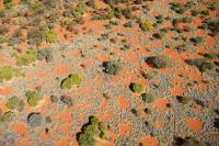 Helicopter View of Fairy Circles in Australia