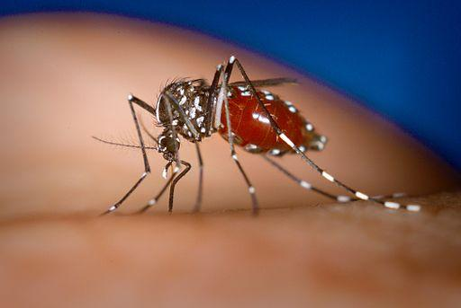 Genes Tell the Story of How the Asian Tiger Mosquito Spread
