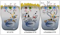 Effect of Thymosin α1 in Cystic Fibrosis