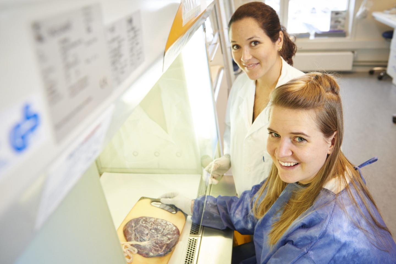 Ninety placentas provide clues to preeclampsia