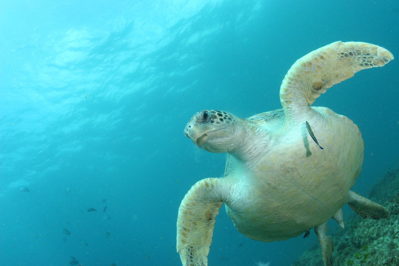 World's Turtles Face Plastics Deluge Danger (1 of 2)