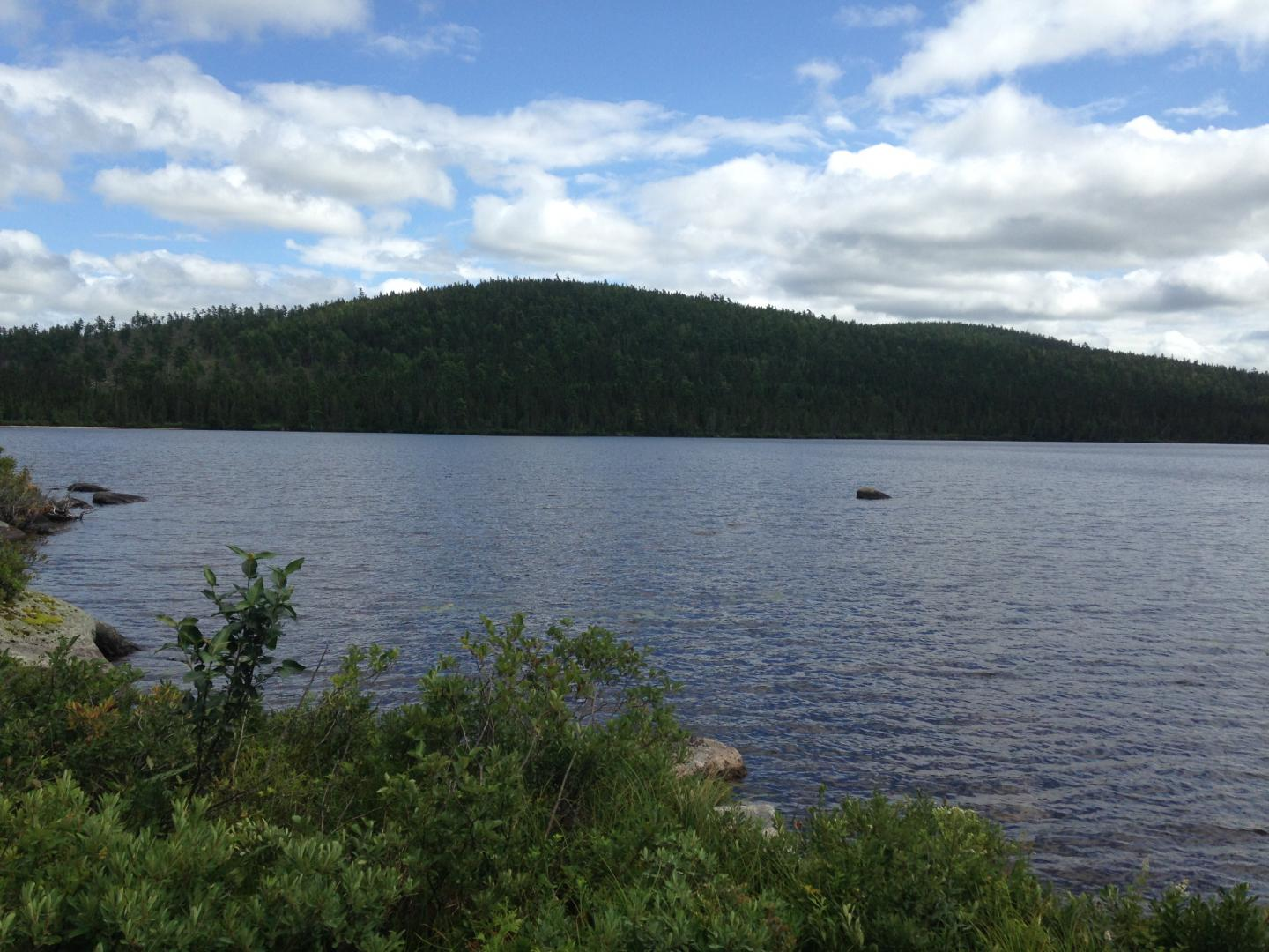 Fifty Years Later, DDT Lingers in Lake Ecosystems