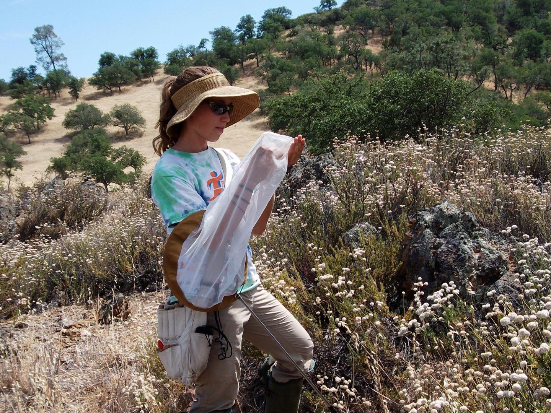 USU Entomologist Joan Meiners in Pinnacles National Park