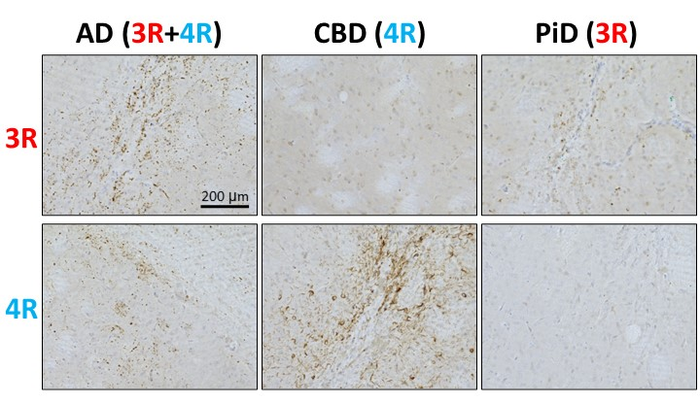 Isoform-specific, seed-dependent tau accumulation in tau-fibril-injected Tau 3R/4R mouse