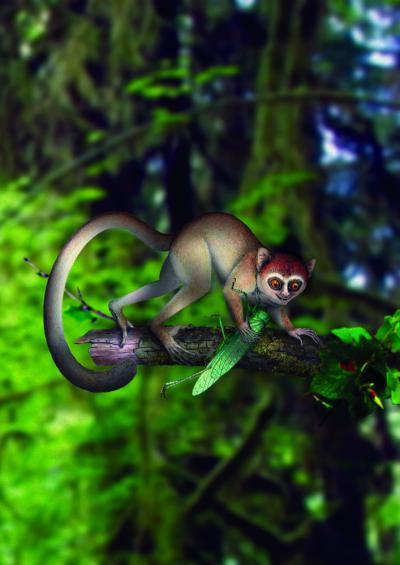 The Earliest Primate in its Habitat