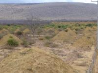 Termite Mounds (2 of 3)