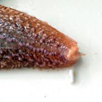 Starfish (3 of 3)