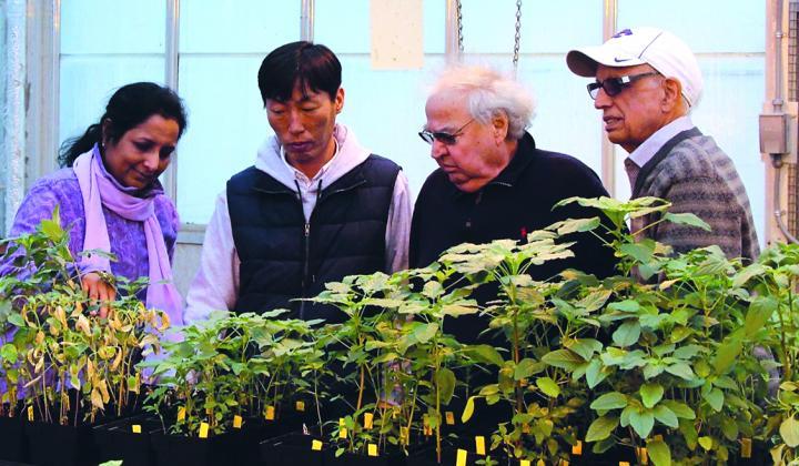 Kansas State University Researchers Make Breakthrough in Glyphosate Resistance in Pigweeds