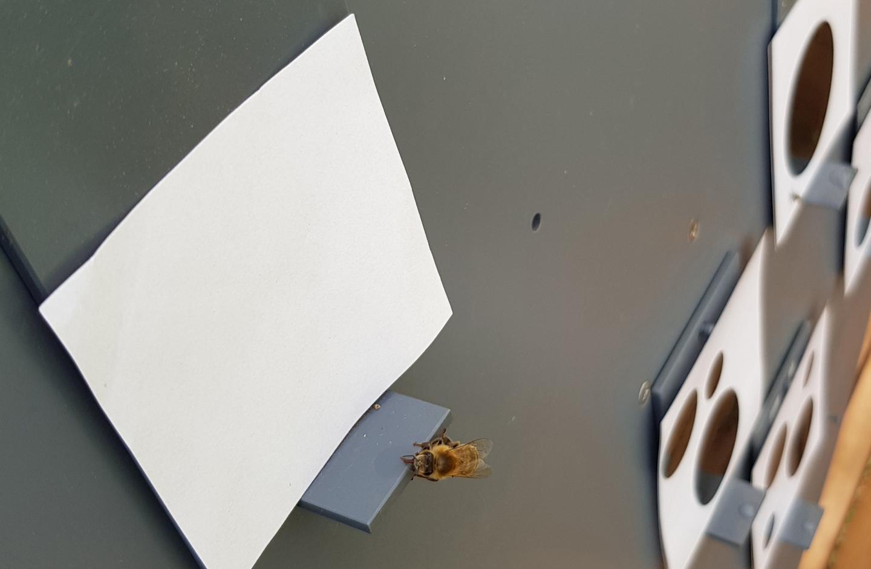 Bee Chooses Zero (2)