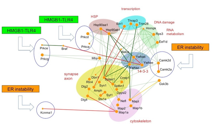 The core molecular network shared by Alzheimer's disease and frontotemporal lobar degeneration.
