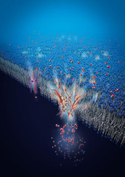 Artificial Water Channels Enable Fast and Selective Water Permeation through Water-Wire Networks
