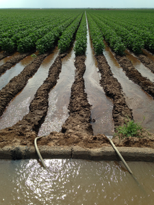 Irrigation canal - cotton field