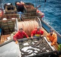 Sablefish Catch