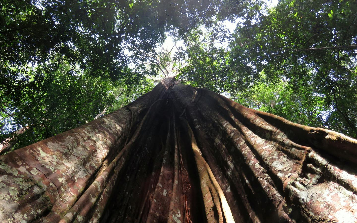 Drought in the Amazon Affects Larger Trees More Severely