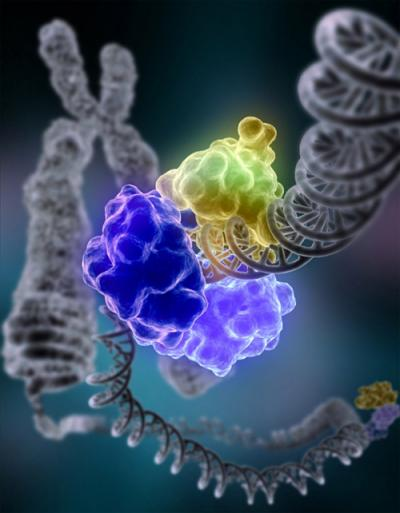 Huge Human Gene Study Includes Penn State University Research