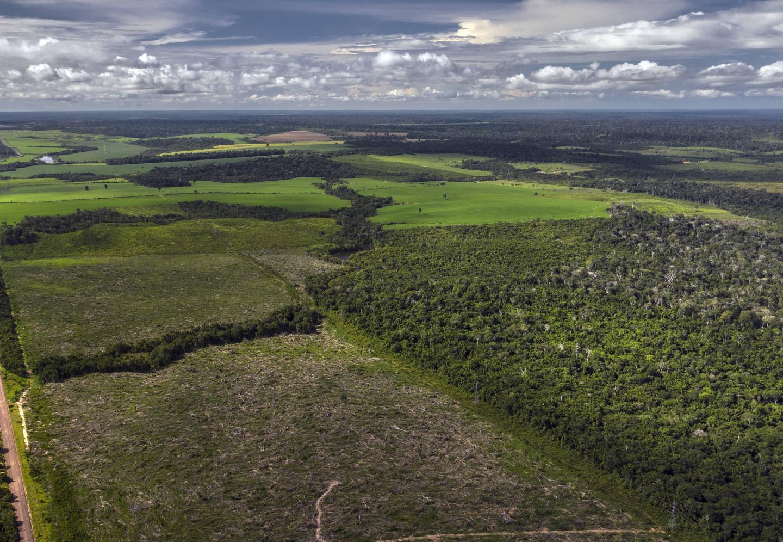 Drone Image Showing Forest Fragmentation