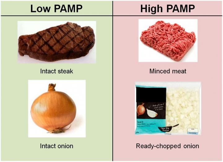 Image of Foods High and Low in PAMP