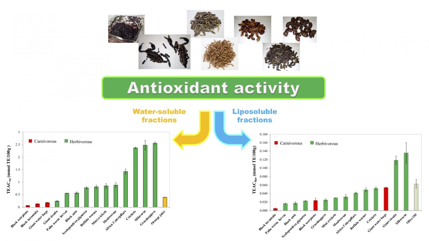 Meet the Six-Legged Superfoods: Grasshoppers Top Insect Antioxidant Rich List