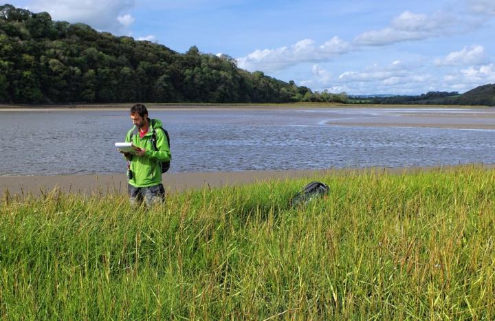 Coastal wetlands' vital flood protection revealed
