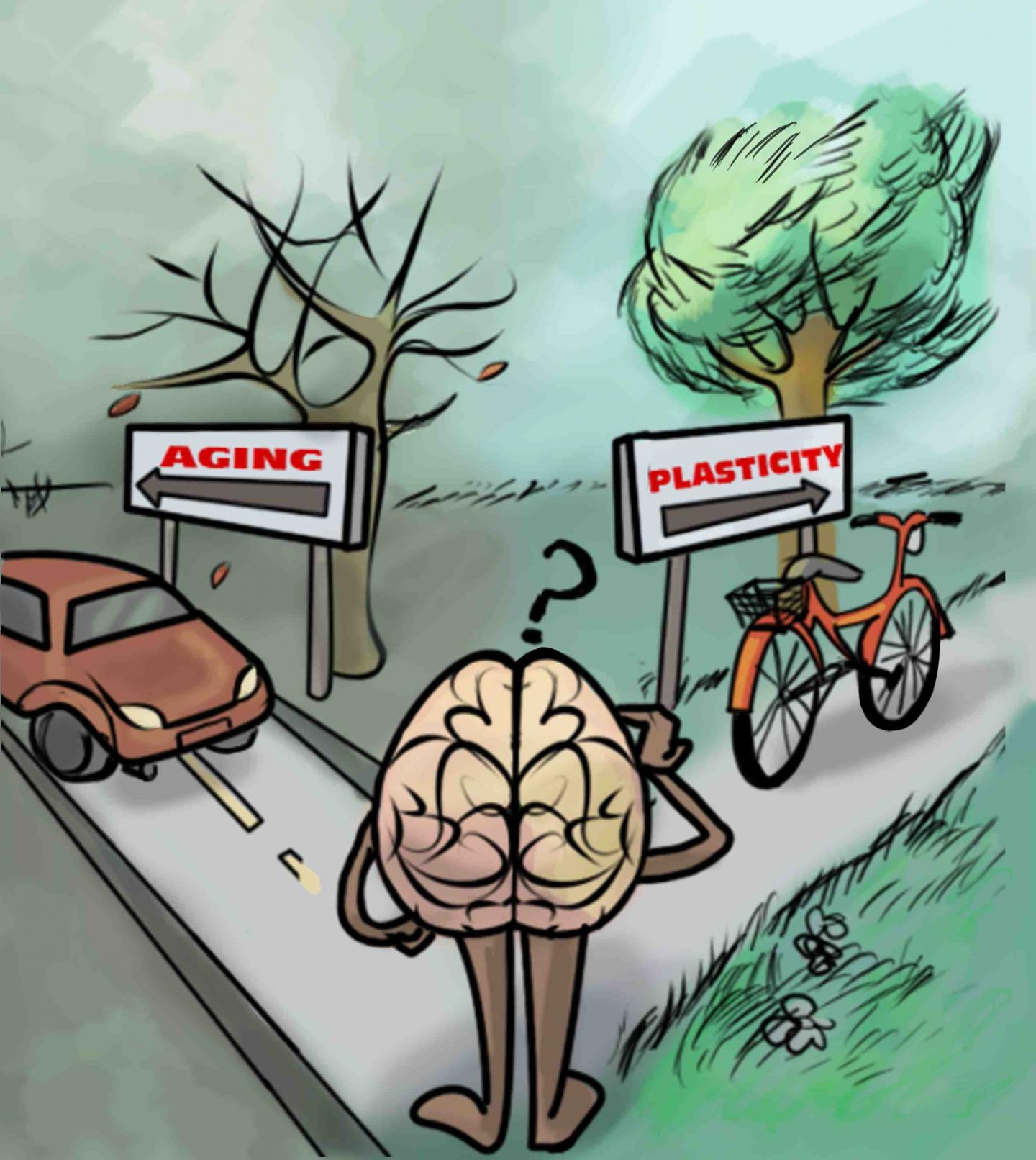 Physical Activity Associated with Brain Plasticity