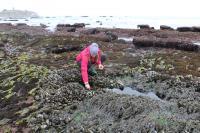 Community scientist explores tidepools