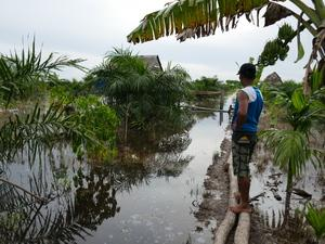 Man stands on logs in water looking across fields of water with vegetation including palms sticking out