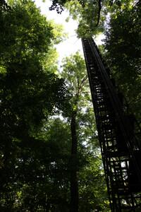 Tall trees reaching into sky with tall, narrow tower