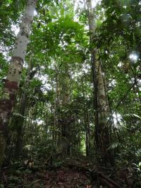 Interior view of the Amazon Basin forests