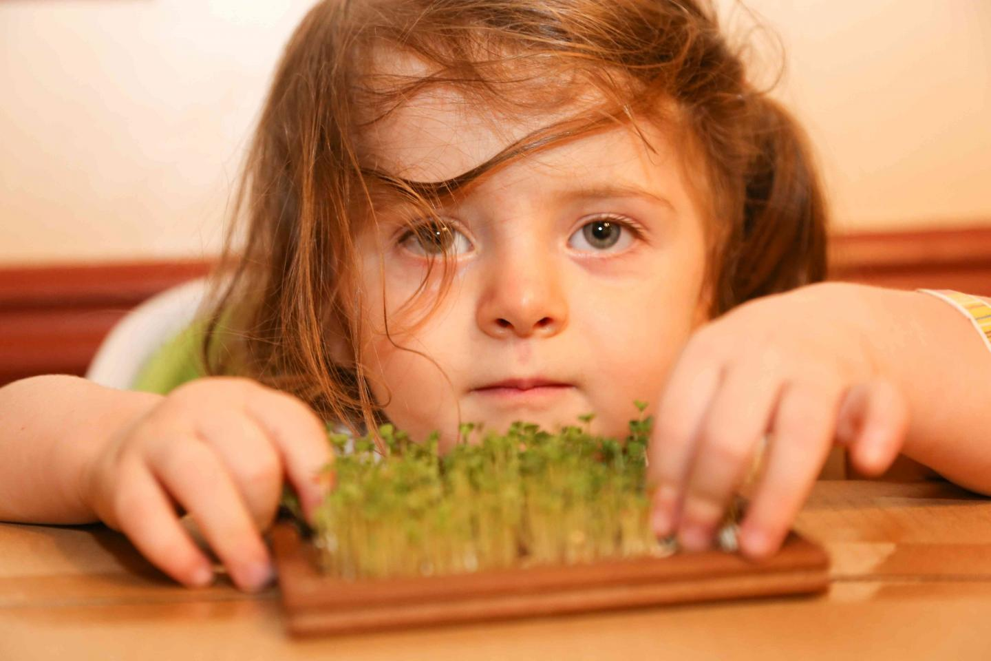 Sedlak's Daughter Grows Broccoli Sprouts