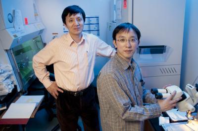 Professor Liqun Luo and Kazunari Miyamichi, Stanford University