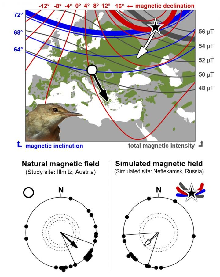 Map: Eurasian reed warbler breeding range and variation in geomagnetic signature