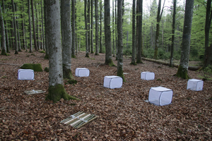 Experiment with deadwood in the Bavarian Forest National Park: some of the wood is kept in cages to keep insects at bay.