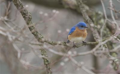 Bluebirds Struggle to Find Happiness on Island Paradise