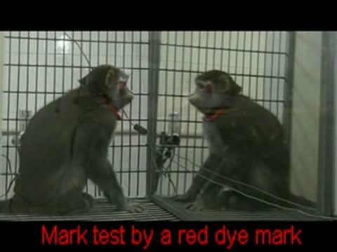 Video: Rhesus Monkeys Can Learn to Recognize Themselves in the Mirror
