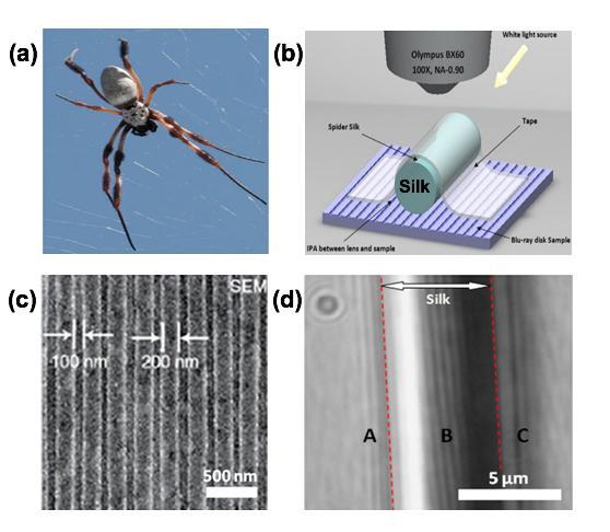 Spider Silk Lens Images