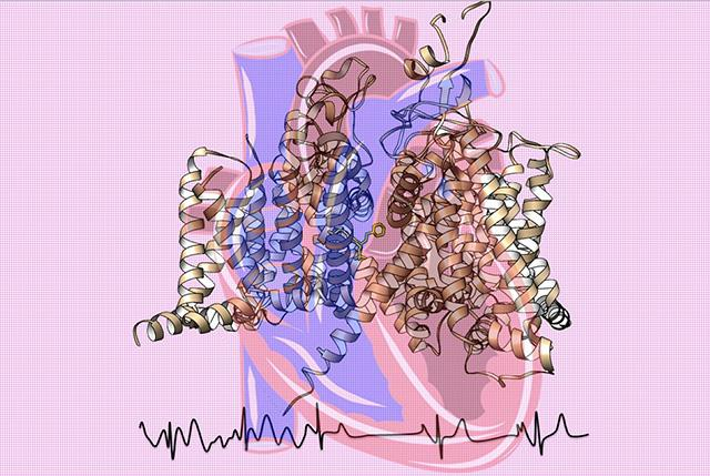 Structure of Heart Sodium Ion Channel