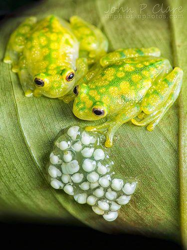 Frogs Have a Diverse Range of Parenting Behaviours